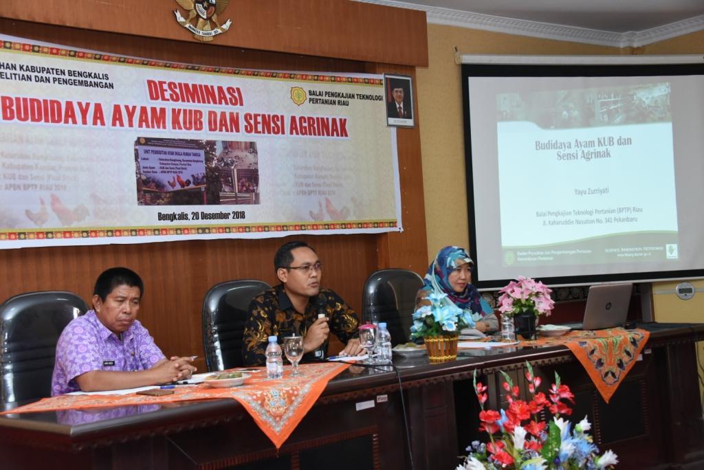 Balitbang Bengkalis Gelar Desiminasi Budidaya Ayam KUB