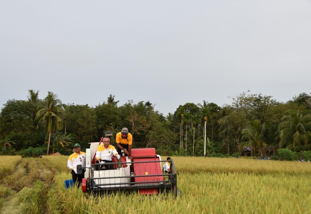 Gubri Hadiri Panen Raya Padi di Desa Mentayan