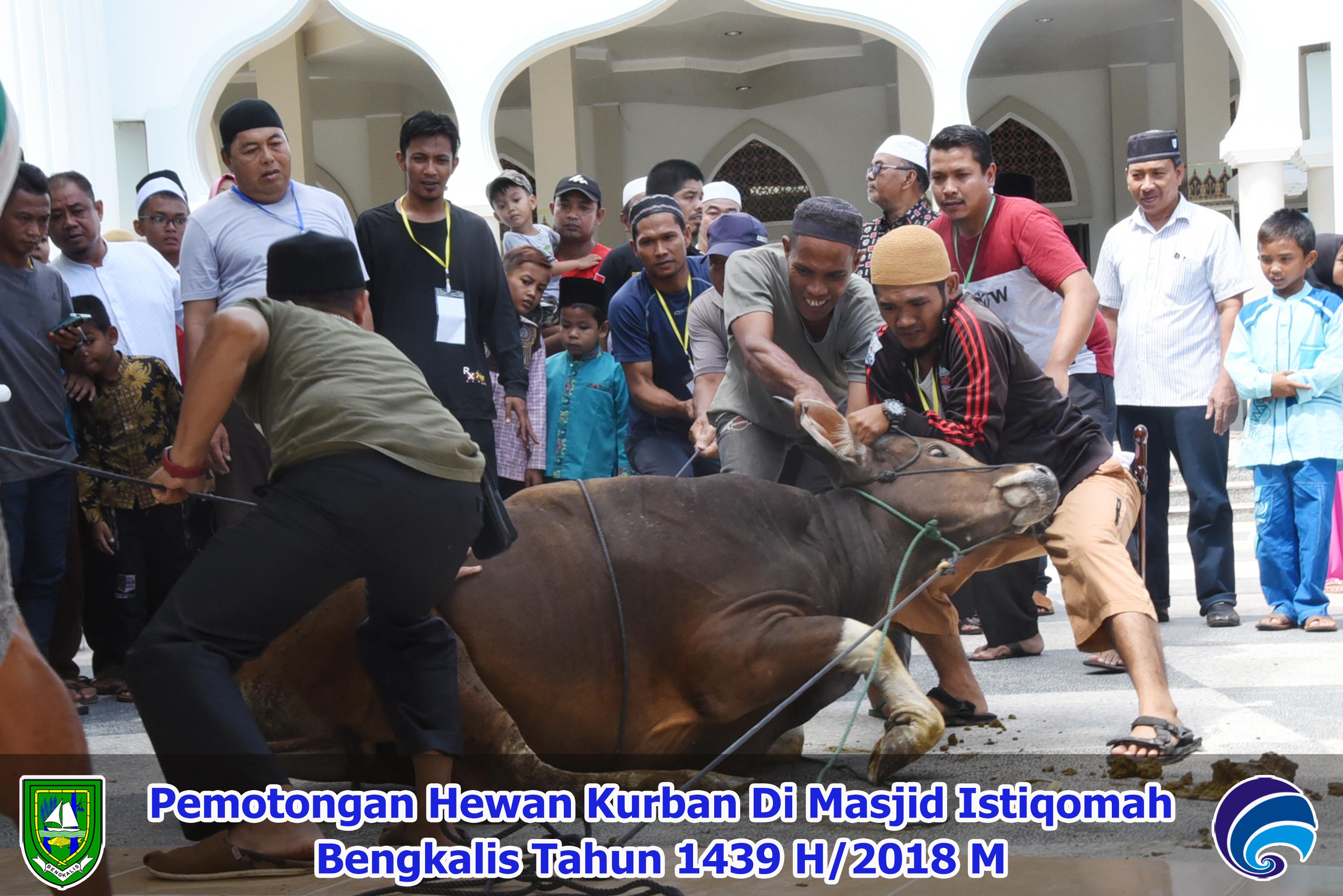Pemotongan Hewan Kurban di Masjid Agung Istiqomah Bengkalis 1439 H/2018 M